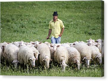 Shepherd In Umbria Canvas Print by Ning Mosberger-Tang
