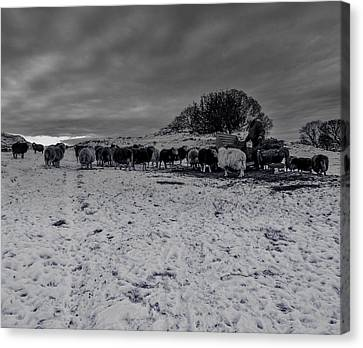 Shepherds Work Canvas Print by Keith Elliott
