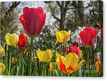 Canvas Print featuring the photograph Sherwood Gardens 17 by Chris Scroggins