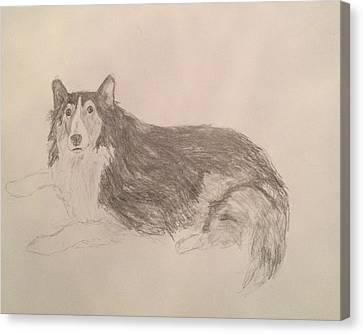 Shetland Sheepdog Canvas Print - Shetland Sheepdog by John Bichler
