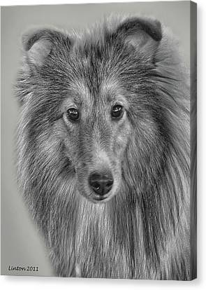 Shetland Sheepdog Canvas Print by Larry Linton