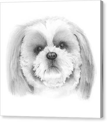 Shih Tzu    Canvas Print by Ann Hamilton