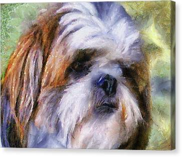 Shih Tzu Portrait Canvas Print