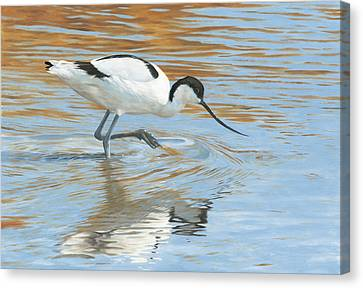 Shimmer Canvas Print by Clive Meredith