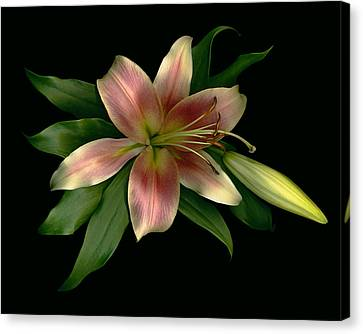 Peaches Canvas Print - Shimmer Lily Shine by Deborah J Humphries
