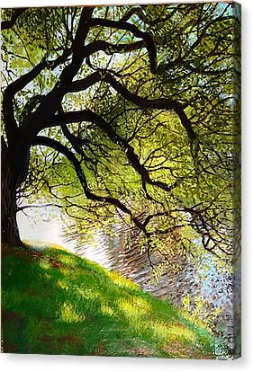 Shimmering Reflections Canvas Print by David Bottini