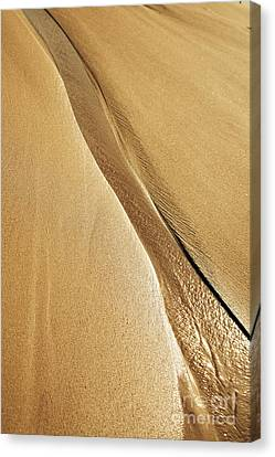 Shimmering Sand Canvas Print by Brandon Tabiolo - Printscapes