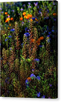 Shimmers Canvas Print