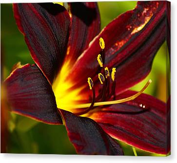 Canvas Print featuring the photograph Shine From Within by Ben Upham III
