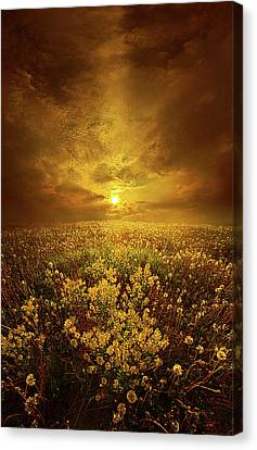 Shine On Me Canvas Print by Phil Koch