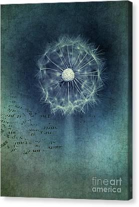 Shine Canvas Print by Priska Wettstein