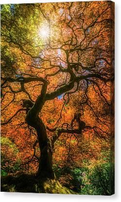 Shine Through Canvas Print by Ryan Manuel