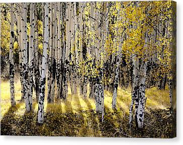 Shining Aspen Forest Canvas Print by The Forests Edge Photography - Diane Sandoval