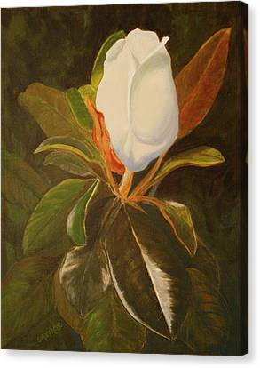 Shining Magnolia Canvas Print
