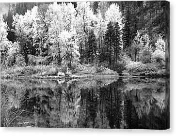 Shining Trees Canvas Print