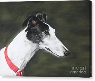 Rescued Greyhound Canvas Print - Shobe by Charlotte Yealey