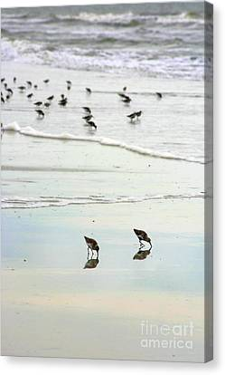 Beach Theme Decorating Canvas Print - Plundering Plover Series 7 by Angela Rath