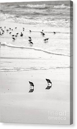 Beach Theme Decorating Canvas Print - Plundering Plover Series In Black And White 7 by Angela Rath