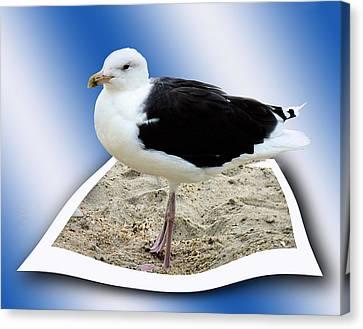 Shore Bird Oob Canvas Print by Eleanor Bortnick