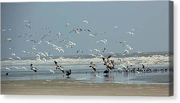 Shorebirds On The Beach Canvas Print by Rosanne Jordan