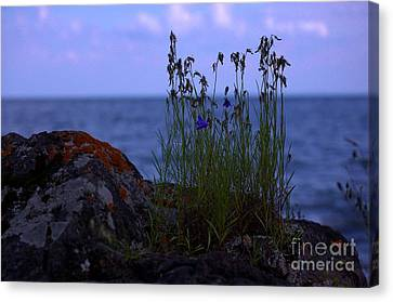 Shoreline Beauties Canvas Print by The Stone Age