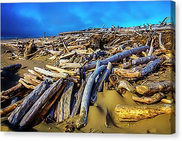 Shoreline Driftwood Canvas Print by Garry Gay