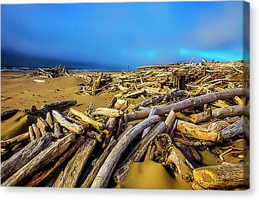 Shoreline Full Of Driftwood Canvas Print by Garry Gay