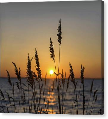 Shoreline Grass Silhouette Canvas Print