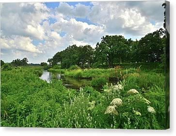 Shoreline Of Nippersink Creek Canvas Print