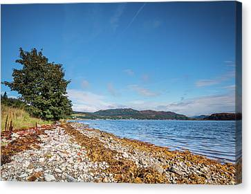 Shoreline On The Kyles Of Bute Canvas Print by David Head