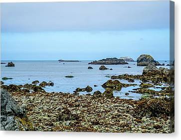 Shoreline Canvas Print by Ric Schafer