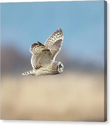 Canvas Print featuring the photograph Short-eared Owl In Flight by Angie Vogel