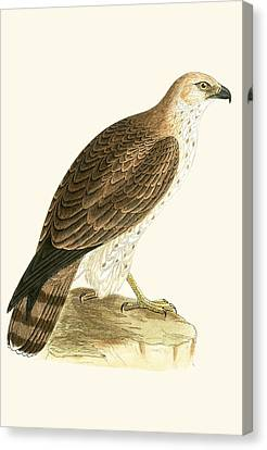Short Toed Eagle Canvas Print by English School