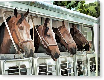 Show Horses On The Move  Canvas Print by Wilma Birdwell