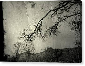 Canvas Print featuring the photograph Show Me  by Mark Ross