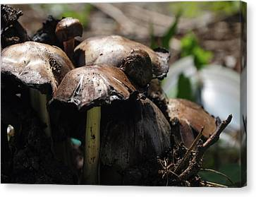 Shrooms Canvas Print by Bill Cannon