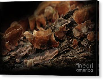 Canvas Print featuring the photograph Shrooms by Kim Henderson