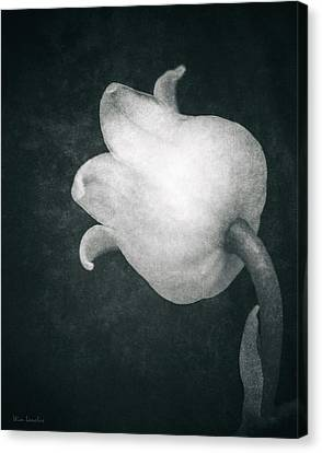 Shy Canvas Print by Wim Lanclus