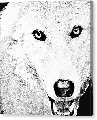 Out Of The Woods Canvas Print - Shy Wolf by Debra     Vatalaro