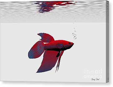 Siamese Fighting Fish Canvas Print by Corey Ford