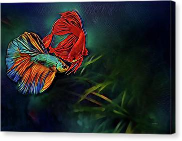 Betta Canvas Print - Siamese Fighting Fish by Russ Harris