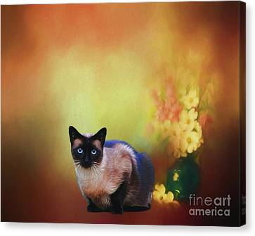 Siamese If You Please Canvas Print