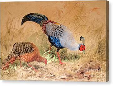 Siamese Pheasant  Canvas Print by Joseph Wolf
