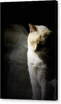 Siamese Reflection Canvas Print by Wendy White
