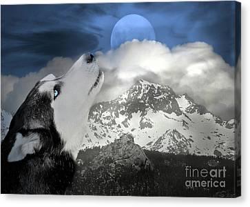 Siberian Husky And Blue Moon Canvas Print by Stephanie Laird