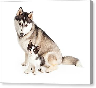 Siberian Husky Dog Sitting With Little Kitten Canvas Print by Susan Schmitz