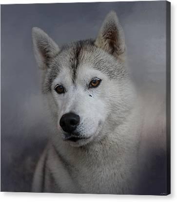 Siberian Husky Canvas Print by Jai Johnson
