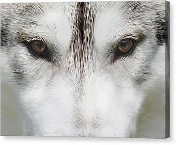 Siberian Husky Portrait 2 Canvas Print by Wolf Shadow  Photography