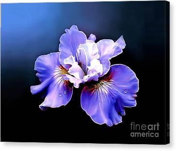 Siberian Iris Canvas Print by Robert Foster