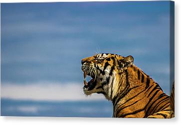 Siberian Tiger Canvas Print by Martin Newman